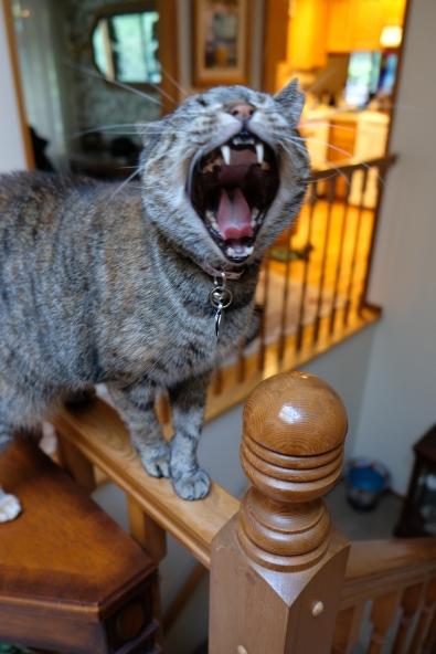 Maya the Cat